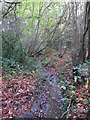 TQ4366 : The Kyd Brook - Main Branch, in Sparrow Wood (8) by Mike Quinn