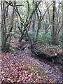 TQ4366 : The Kyd Brook - Main Branch, in Sparrow Wood (9) by Mike Quinn