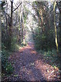 TQ4466 : Footpath west of Gumping Common by Mike Quinn