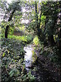 TQ4465 : The Kyd Brook - East Branch, on Gumping Common (2) by Mike Quinn