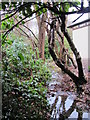 TQ4364 : Minor tributary of the Kyd Brook - Main Branch, Ninhams Wood, BR6 (3) by Mike Quinn