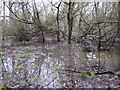 TQ4264 : Small (unmarked) lake in Lake Wood by Mike Quinn