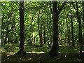 TQ5309 : Pollards Wood by Simon Carey