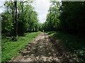 SU9415 : South downs Way in woodland near Tegleaze by Tim Heaton