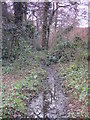 TQ4465 : Minor tributary of the Kyd Brook, Darrick Wood (5) by Mike Quinn