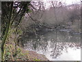 TQ4465 : Pond in Darrrick Wood by Mike Quinn