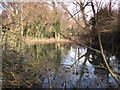 TQ4465 : Pond in Darrrick Wood (2) by Mike Quinn