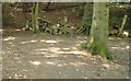 TL7805 : Turn Right for Nature Trail by Roger Jones