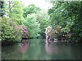 NJ8827 : Rhododendrons by the pond by don cload