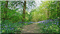 TM2031 : Bluebells in Copperas Wood by Roger Jones