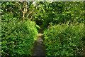 NG4743 : Path by the River Leasgeary by John Allan