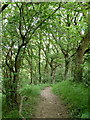 SK3172 : Woodland path down towards Birley brook by Andrew Hill