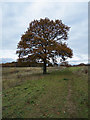 TL9335 : Autumn Tree, Hullback's Grove by Roger Jones