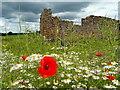 SO6424 : Wild flowers by Aricon Barn : Week 23
