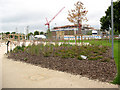 TQ3677 : Fordham Park: planting by Stephen Craven
