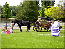 SJ9042 : Horse-drawn carriage, Longton Park, nr Dresden by Carl Farnell
