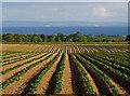 NO3905 : View over farmland near Balcormo Mains : Week 24