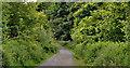 J4477 : Path, Cairn Wood, Craigantlet (3) by Albert Bridge