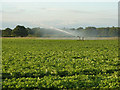 SK8471 : Potato irrigation by Richard Croft