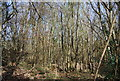 TQ5051 : Coppiced trees, Brockhill Wood by Nigel Chadwick