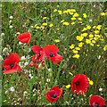 SO8396 : Wild flowers near Seisdon, Staffordshire by Roger  Kidd