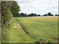 TM0431 : Footpath on field boundary by Roger Jones