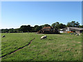 TQ5407 : Barn Field by Simon Carey