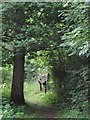 TM0544 : Woodland Path, Wolves Wood RSPB Reserve by Tim Marchant