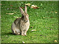 NZ0416 : Rabbit in the Sensory Garden by David Dixon