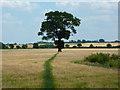 SK8458 : Footpath to Brills Hill : Week 27
