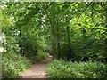 SX5254 : Path beside Chelson Meadow by Derek Harper