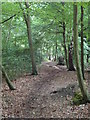 TQ4398 : Footpath in Birch Wood by Roger Jones