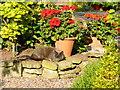 SO6424 : Early morning cat nap by Jonathan Billinger