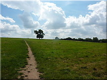 SK3837 : Tree in middle of a field by Peter Barr