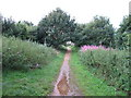 TM1436 : Path near Alton Water by Roger Jones