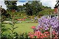 NT1136 : Beechgrove Garden, Broughton : Week 29