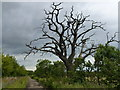 TL1393 : Dead tree alive with birds by Richard Humphrey