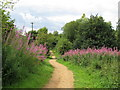 TM1336 : Cycle track near Alton Water by Roger Jones