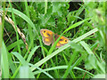 TM1034 : Gatekeeper butterfly by Roger Jones