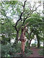 TQ4088 : Dead tree in Tarzy Wood by Roger Jones