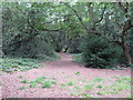 TQ4088 : Footpath in Tarzy Wood by Roger Jones