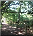 TQ4670 : Footpath junction in Scabury Park Nature Reserve by David Anstiss