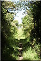 SW7017 : Bridleway approaching the track to Erisey Barton by Rod Allday