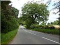 SJ7453 : Old Park Road near Philip's Hill by Alexander P Kapp