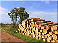 SP0832 : Timber stacked by the by-way : Week 30