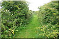 SW4934 : Bridleway to Higher Trenowin by Graham Horn