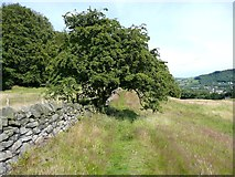 SE0026 : Hawthorn arch at Wood Side, Mytholmroyd by Humphrey Bolton