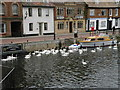 TL3171 : Swanning about on the Ouse by Keith Edkins
