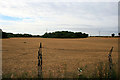 TL0328 : Harvested field near Hipsey Spinney by David Lally
