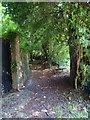 TQ2612 : Cora's Path near the garage in Poynings by Shazz